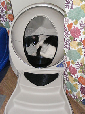 Luna playing in her new Litter Robot